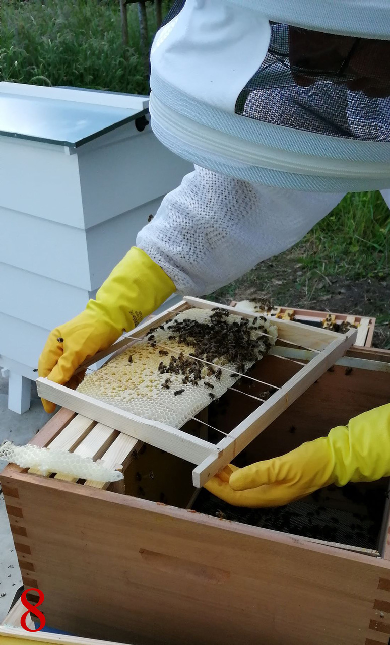 Best unusual beekeeping 8