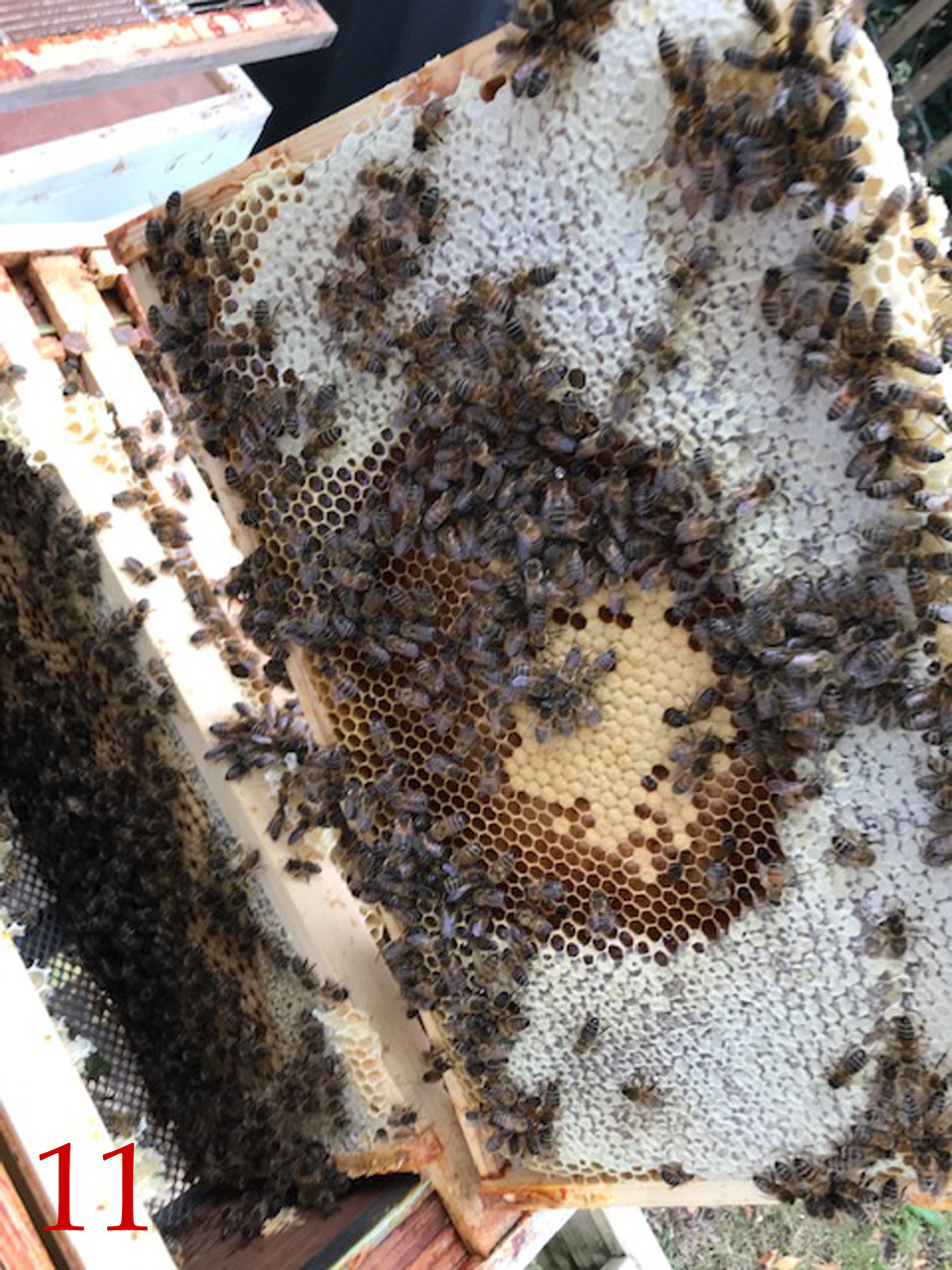Art of BeeKeeping 11