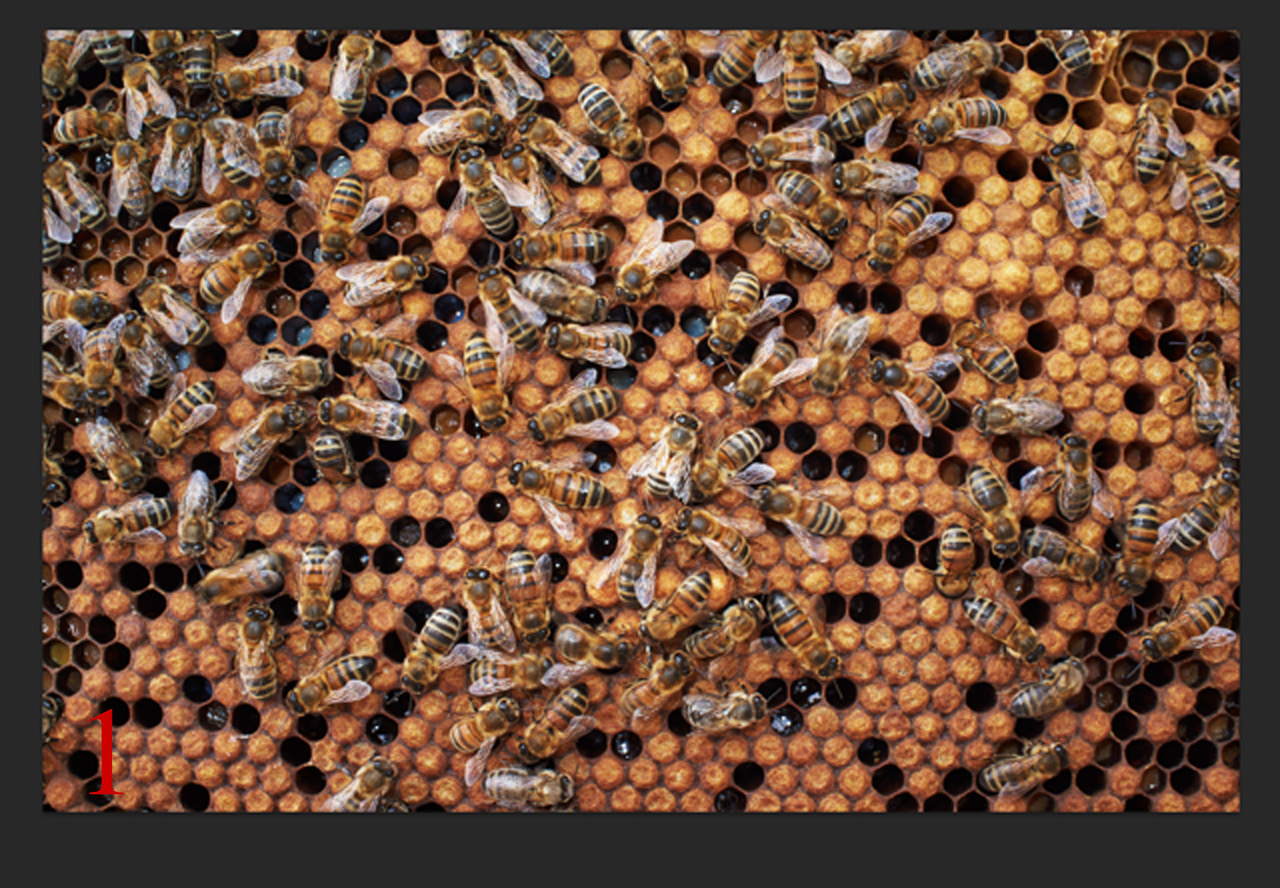 Beautiful Bees 1