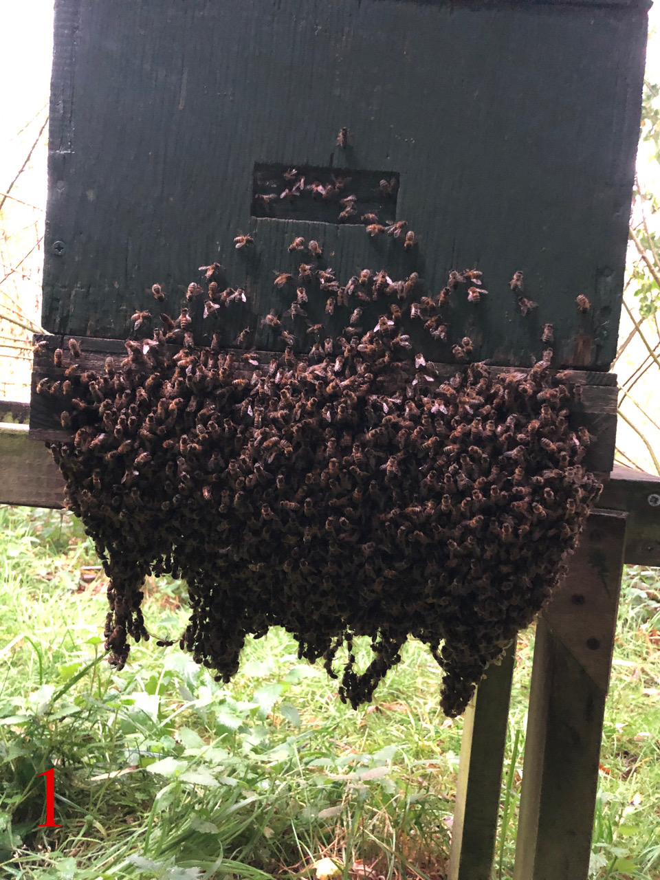 Best unusual beekeeping 1