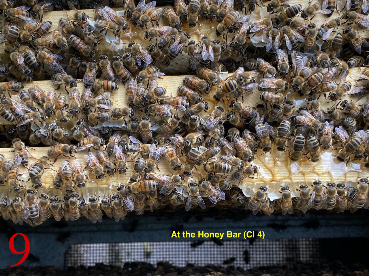 Best unusual beekeeping 9